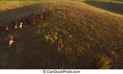 Horses are running on grass. Aerial view of galloping...