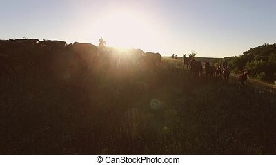 Horse herd is moving. Sun behind the hill. Warm summer...