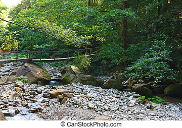 Old wooden bridge over mountain creek in the forest - Old...
