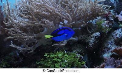 Feeding aquarium fish - Man feed the fish in the aquarium