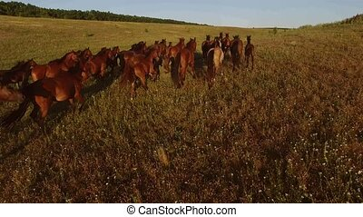 Herd of brown horses. Blue sky over horizon. Love to...