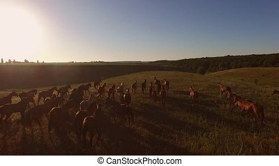 Horse herd running on meadow. Group of hoofed animals. Call...