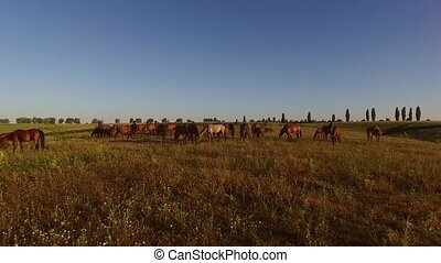 Horse herd on the meadow. Horses eating grass. Animals in...