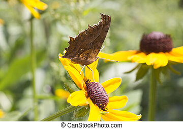 Butterfly on a flower - The butterfly on a flower collects...