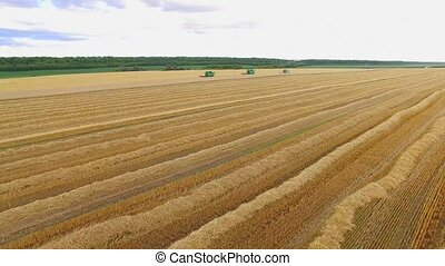 Yellow field and sky. View of harvesters from air....