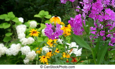 garden flowers, zooming from the foreground to the...