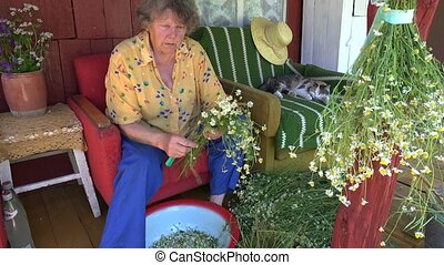 Old experienced herbalist grandma prepare herbs for winter...