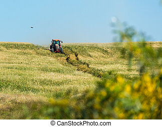 tractor rides through wheat field