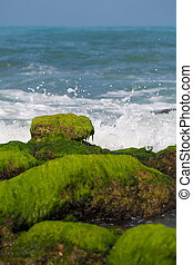 stones covered with seaweed on the beach