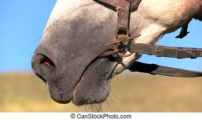Nostrils of a horse. Snaffle in mouth of animal. I smell...