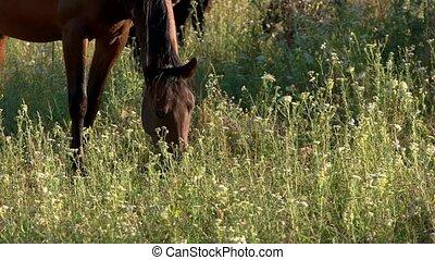 Horse eats grass.