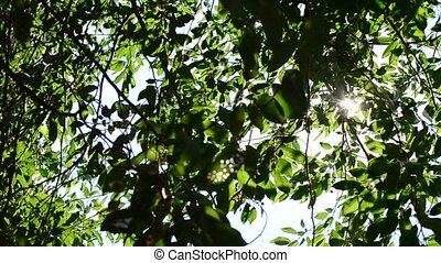 Twinkling sunshine with sun rays coming through green...
