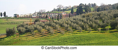 Italy. Tuscany region, Val D\'Orcia valley