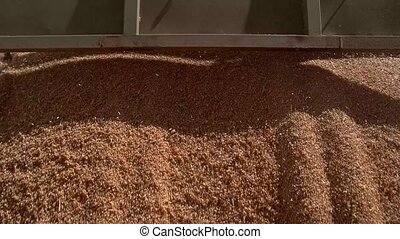 Huge flow of grain. Dust from the grains. Wheat sold at low...