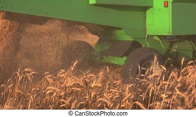 Back view of moving combine. Straw falls out of harvester....