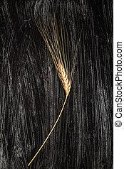 Single Ear of Wheat - Single ear of wheat on black...