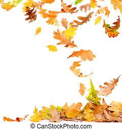Isolated Autumn Leaves - Isolated autumn oak leaves falling...