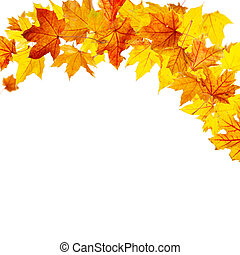 Falling autumn maple leaves - Autumn maple leaves falling...