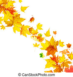 Falling multicolored autumn leaves - Falling multicolored...