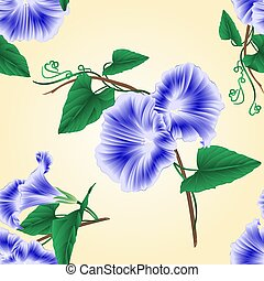 Seamless texture Morning glory blue spring flower vector.eps...