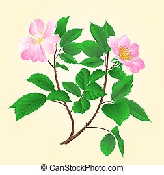 Wild roses twig vector.eps - Wild roses twig leaves and...