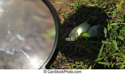magnifying glass are cauterized dry leaf on herb in summer