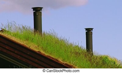 View of green grass waving from wind on roof of little house with two black pipes. Summer. Blue sky