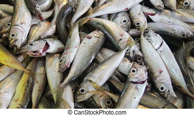 Fresh Fish on the Counter Market - Fish market Fresh sea...