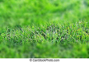 Abstract background of green grass.