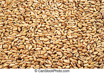 Wheat Berries Close Up - A close up image of whole wheat...