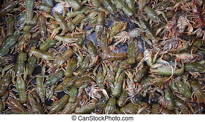 Fresh Crayfish are Sold at the Fish Market on the Counter -...