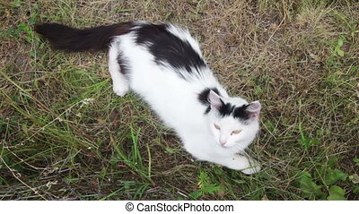 Cat in the Grass Playing with a Person - Black and white cat...