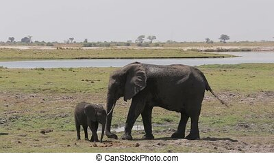 elephants mother take care her baby - African elephants...