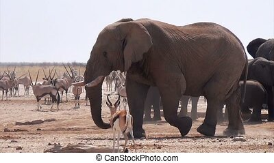 waterhole with Elephants - overcrowded waterhole with...