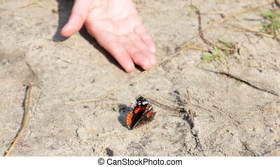 butterfly near the woman's hand CINEMAGRAPH - Beautiful big...