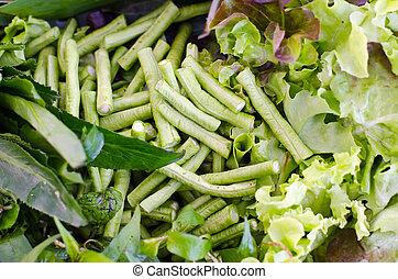 Salad vegetable (Green oak, lettuce and Batavia) leaf and...