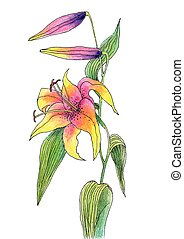 Beautiful color lily - Vector illustration of Beautiful...