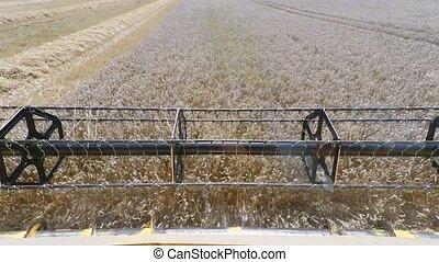 Farmer yellov combine harvester on field. Harvesting mowing...