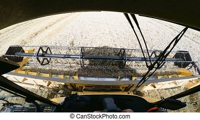 Farmer yellov combine harvester on field. Harvesting mowing...