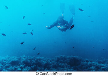 Diver snorkeling among fishes - Underwater image of diver...