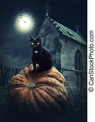 Black cat on a pumpkin