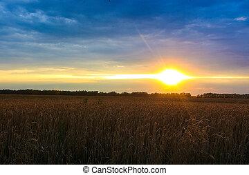 beautiful sunset on a wheat field in autumn