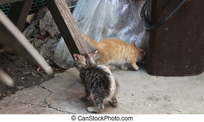 Cute Kittens Playing - Little homeless kittens red and gray...