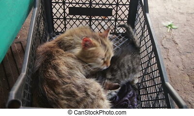Homeless Cat with Kittens in Nature. Cats and kittens in a...