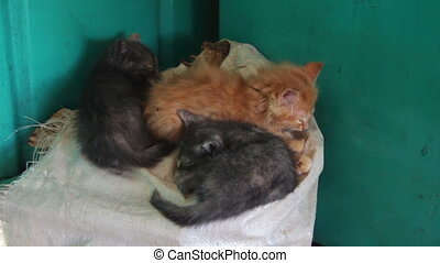 Homeless Kittens Sleeping on a Bag. Red and gray kittens...