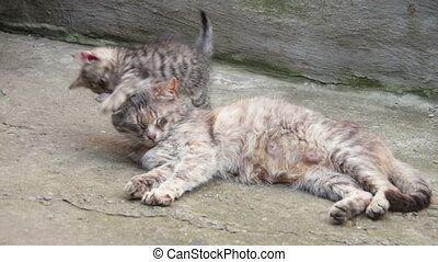 Homeless Kittens are Played with a Cat - Little homeless...