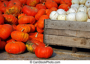 Harvest Bounty - White and orange pumpkins in old crate.