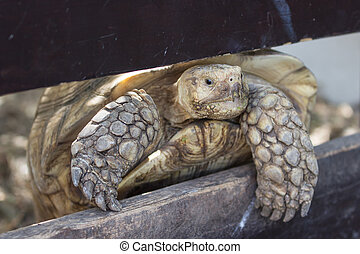 Ground turtle tries to crawl over the fence