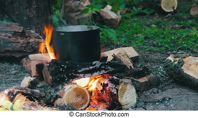 Pot on the Fire in Forest