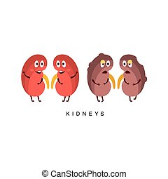 Healthy vs Unhealthy Kidneys Infographic...